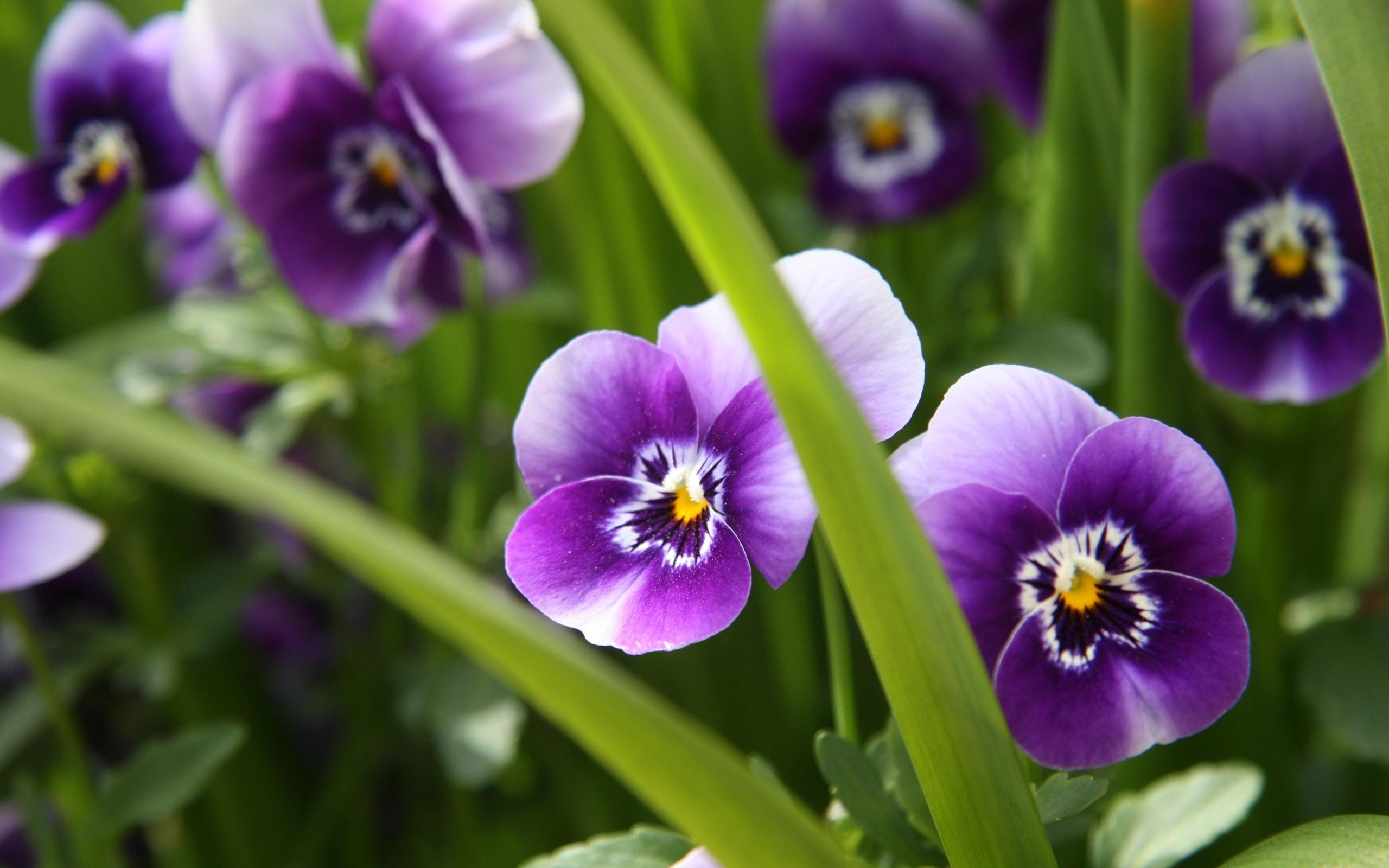 антуриума советы установить картинки цветы более