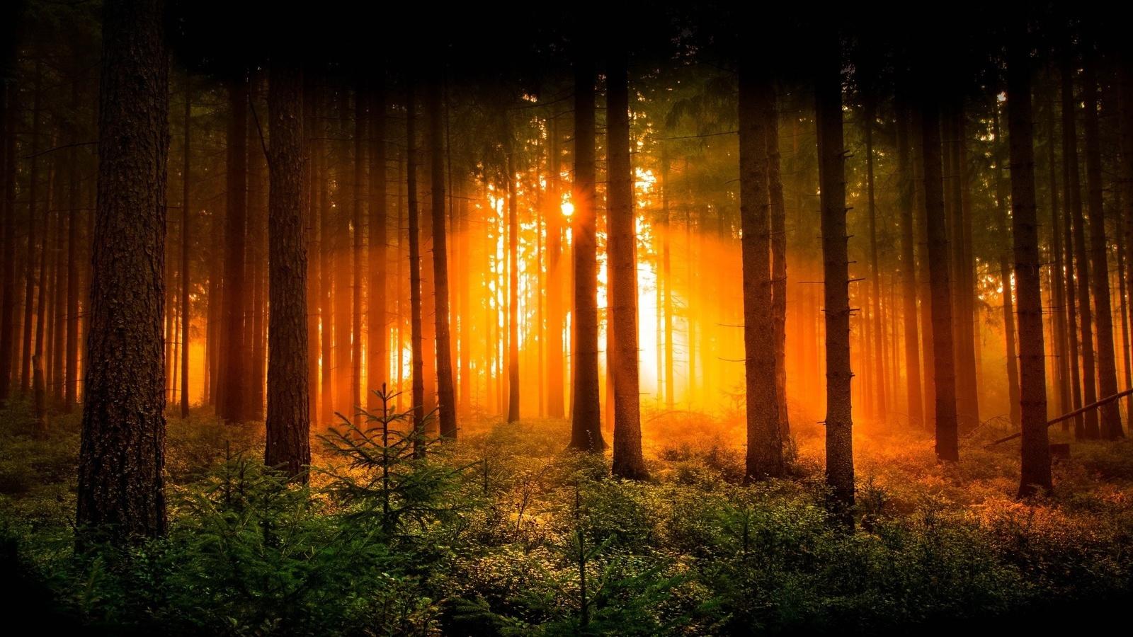 религиозная картинка красивого заката в лесу крупное