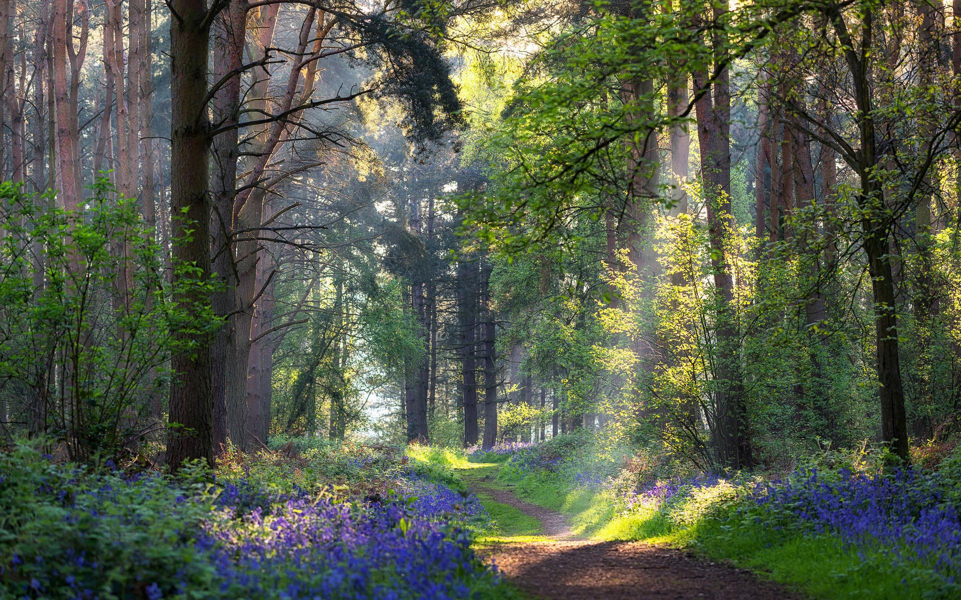 Картинки летних лесов