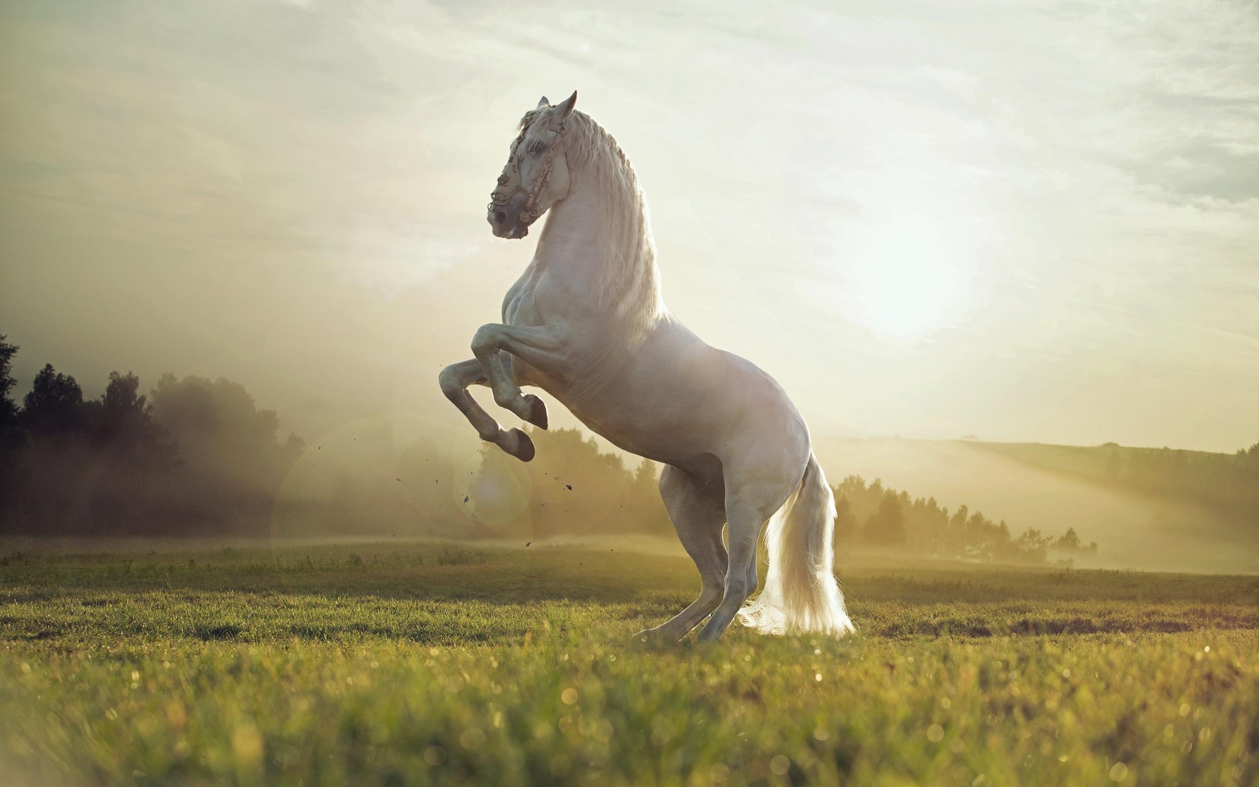 картинки мой конь сковороде растопите сливочное