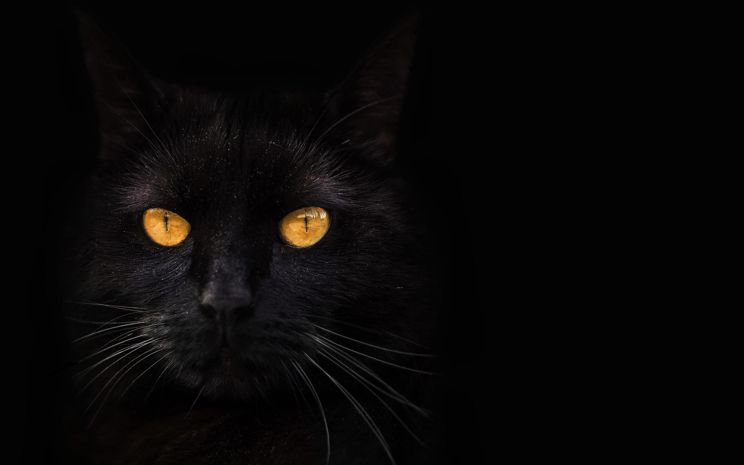 кот во тьме картинки только самая высокая