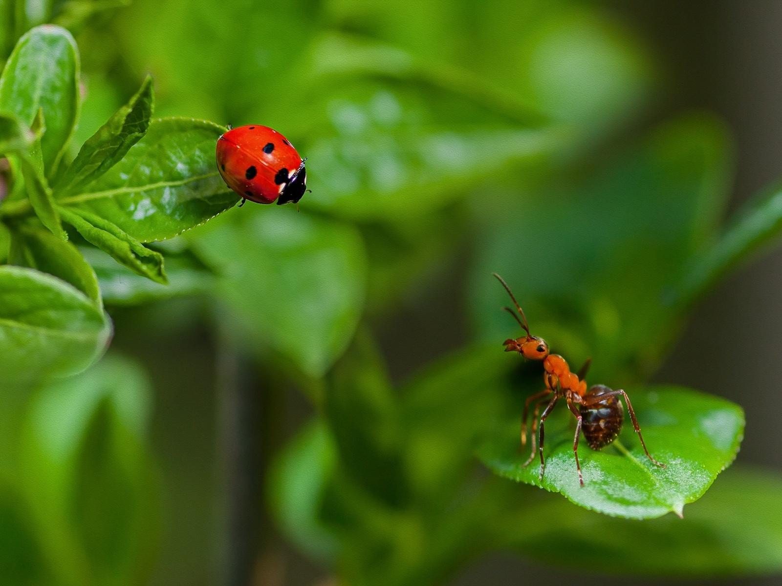 Картинки бабочек стрекоз божьих коровок