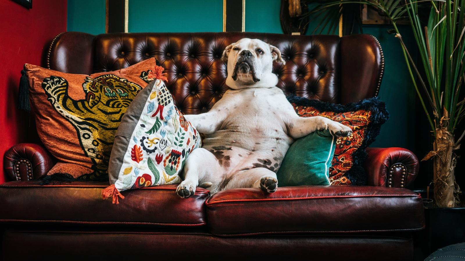 Картинки прикольные на диване, день рождения