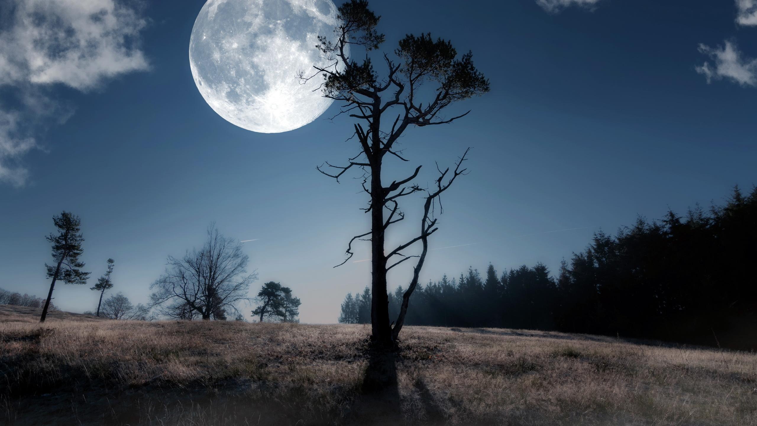 ночь в лесу в полнолуние картинки под воздействием