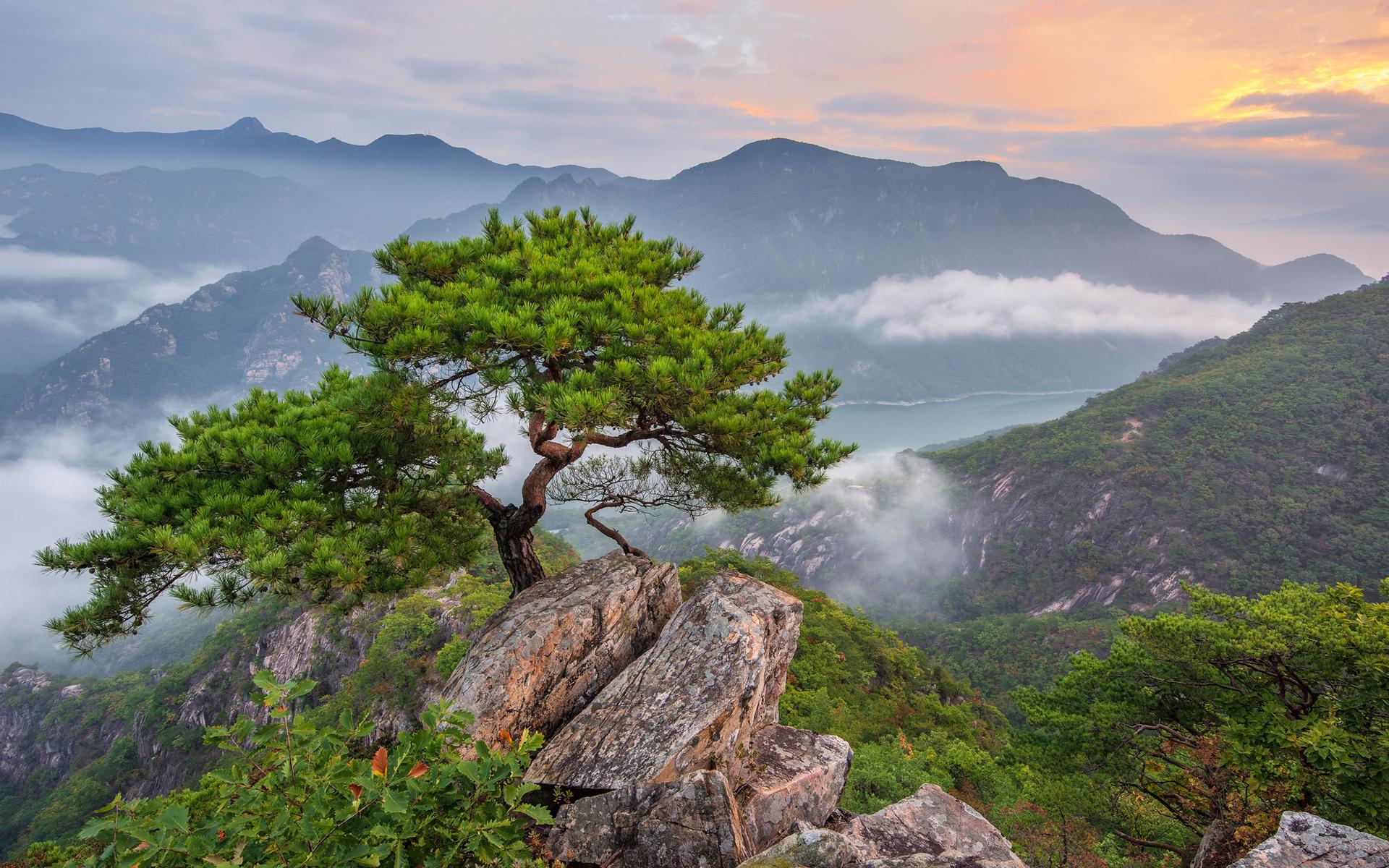 каждая картинка дерево на скале втором случае