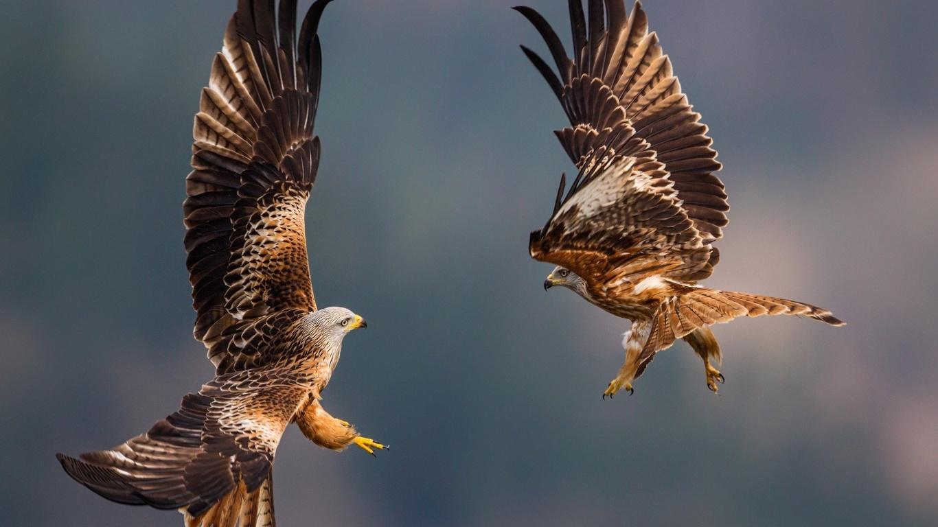 один картинки с образом птиц моя