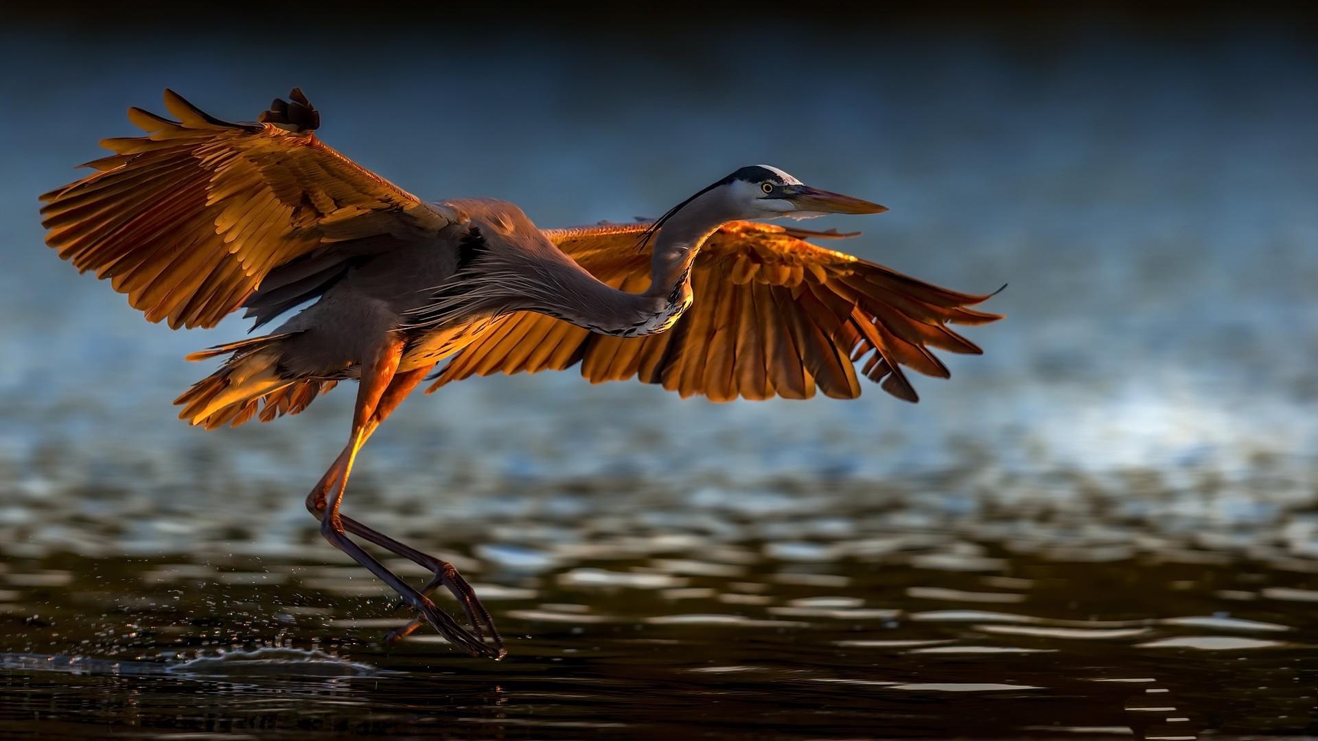 мне взлетающая птица картинки статье