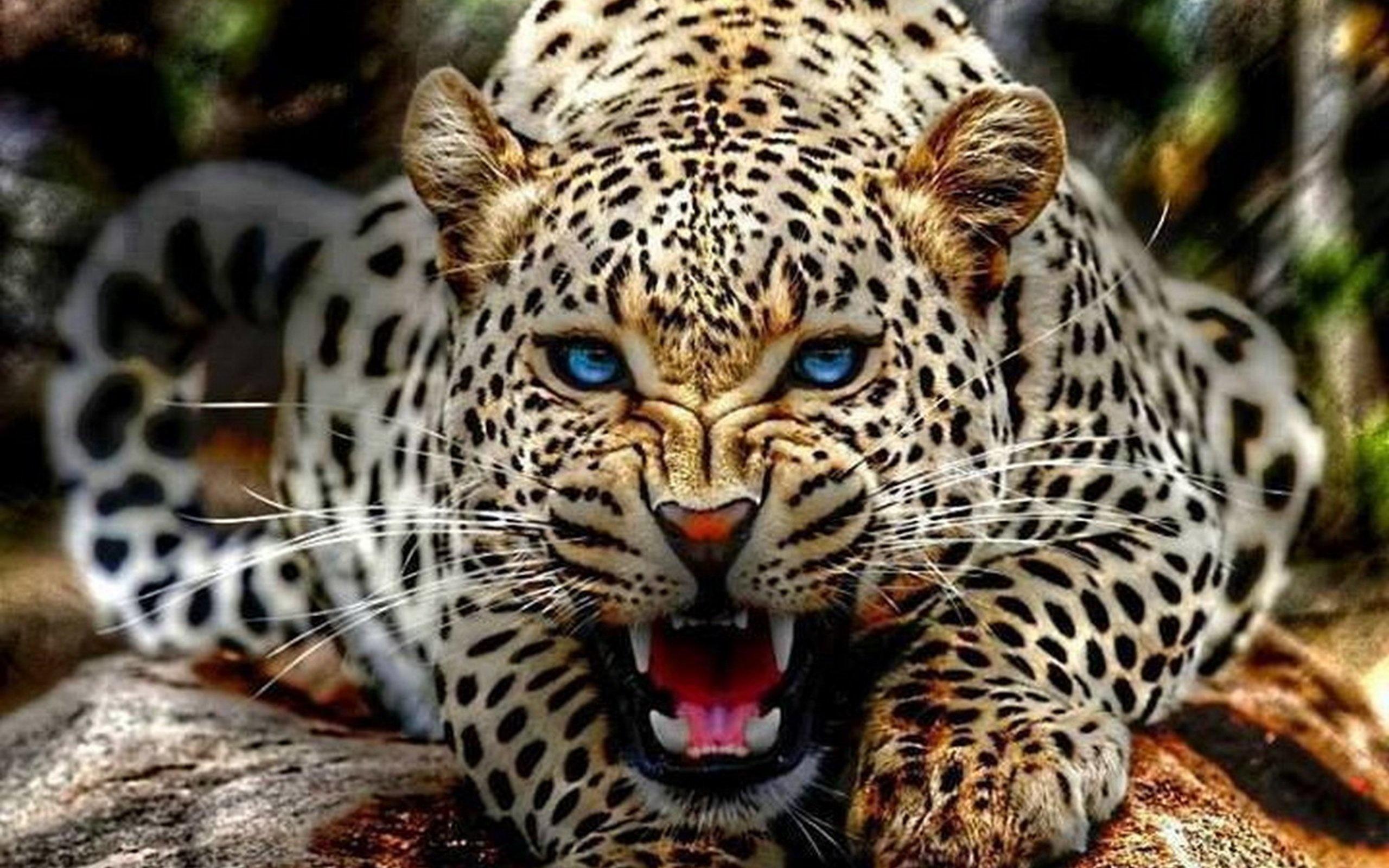 вот картинки про самых красивых животных вас