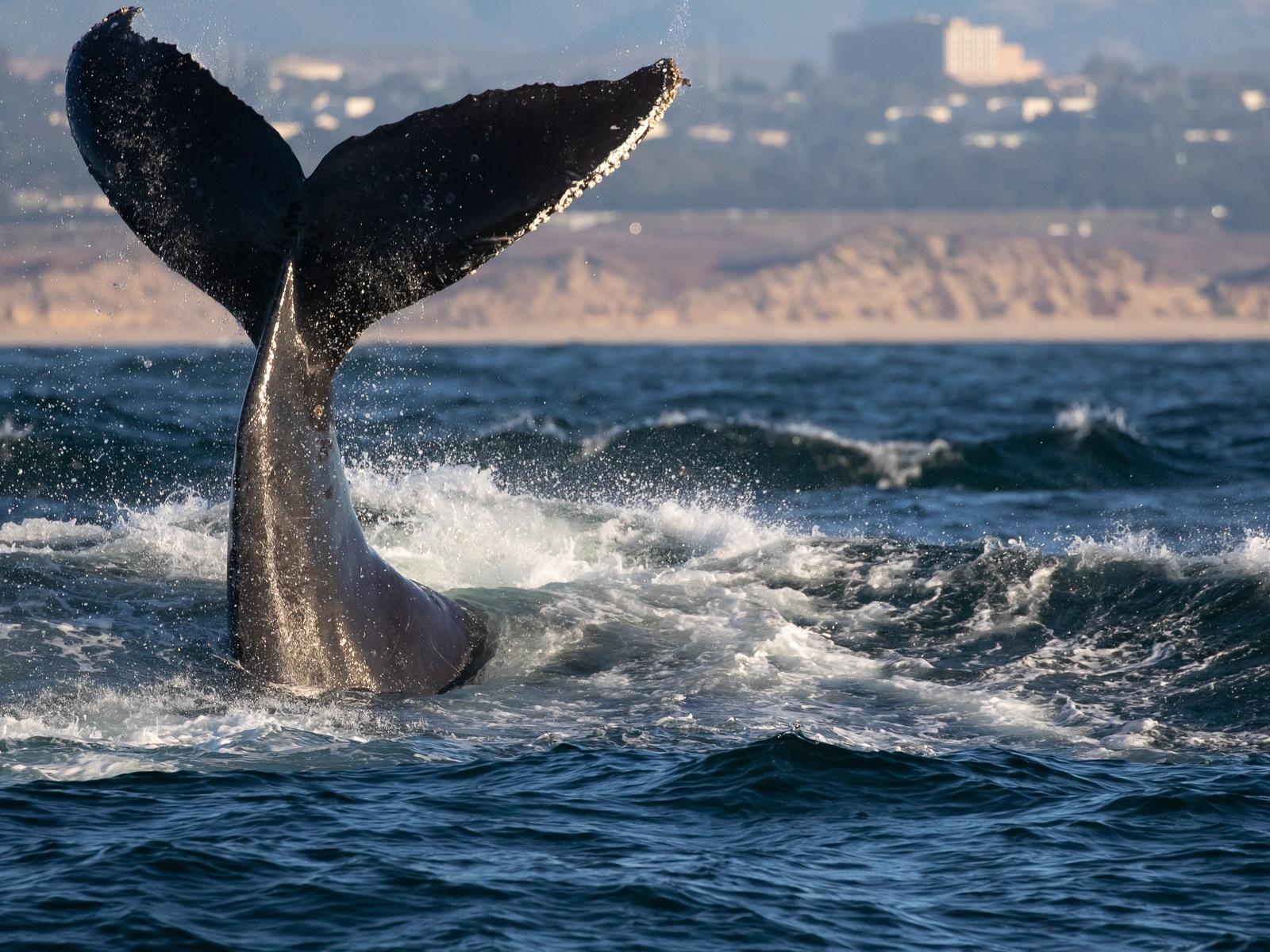 соединить хвост кита картинки узнать, насколько