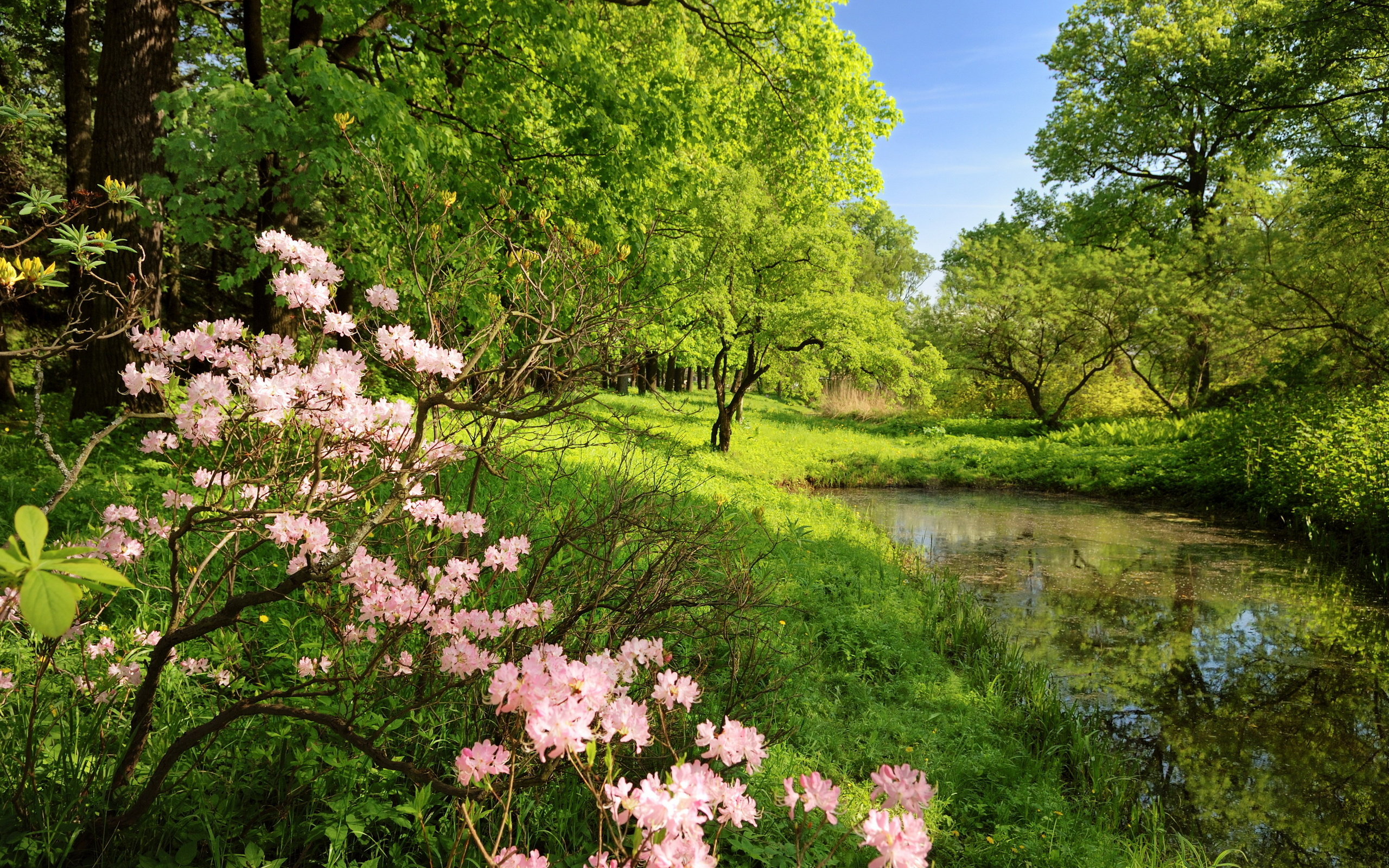 Смотреть красивые картинки природы деревья цветы трава вода