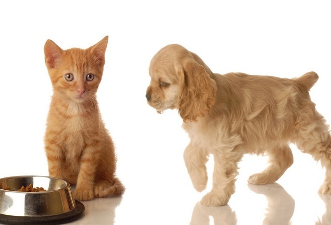 how to get rid of pet odor from couch