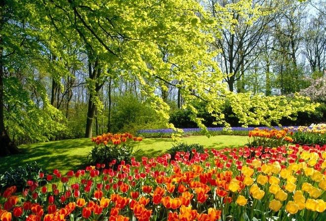 красивое фото природы и цветов
