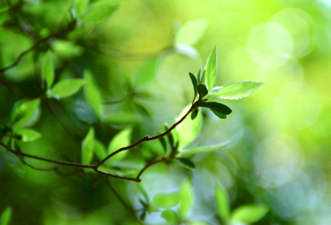 Боке обои, macro bokeh, green leaves, bokeh wallpapers, green leaf, plant, зелень