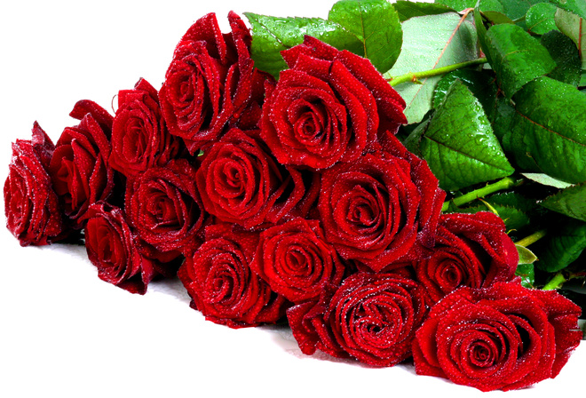 cool, Flower, bouquet, wet, roses, drops, rose, nice, flowers, beautiful, pretty, lovely, red roses