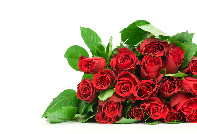 beautiful, roses, bouquet, rose, Flower, nice, flowers, cool, red roses, beauty, pretty, lovely