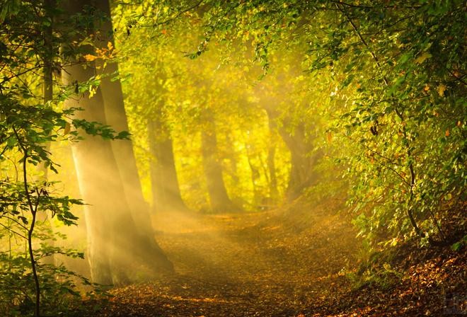 картинки ранняя осень