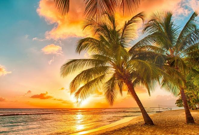 Пальмы солнце пляж