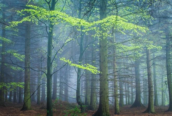 Обои поздняя осень, лес, туман, кусочек лета в осеннем ...