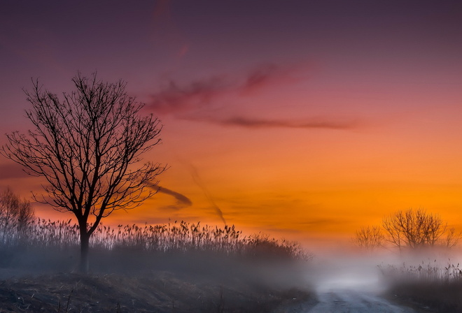 road, morning, tree, mist, tree, sky, purple