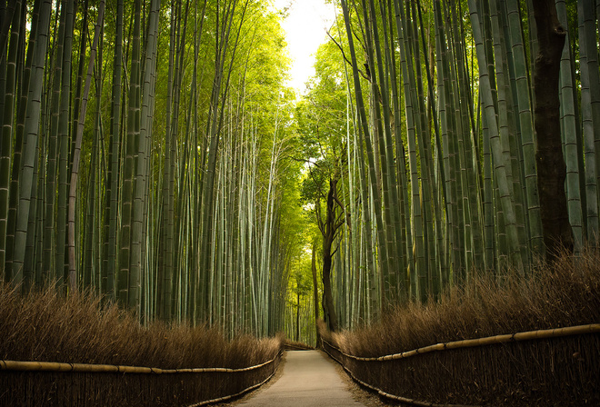 bambu, tree, green, forest, path