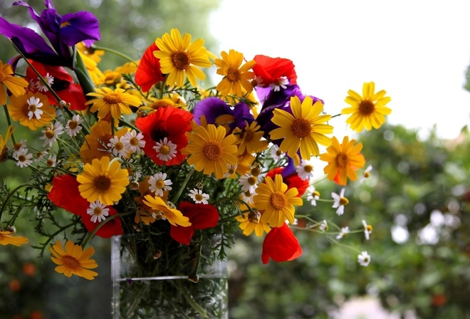 Шикарные полевые цветы фото