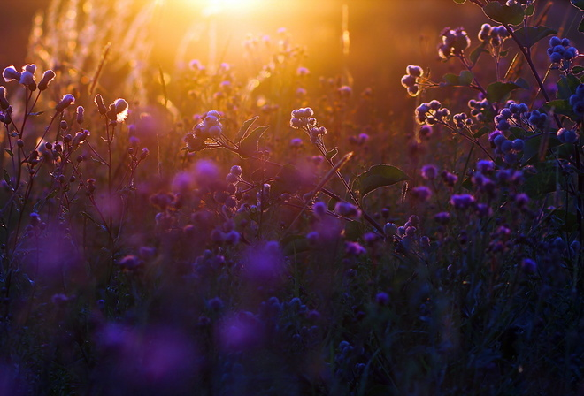 backlight, summer, evening, sunset, light, bokeh, grass