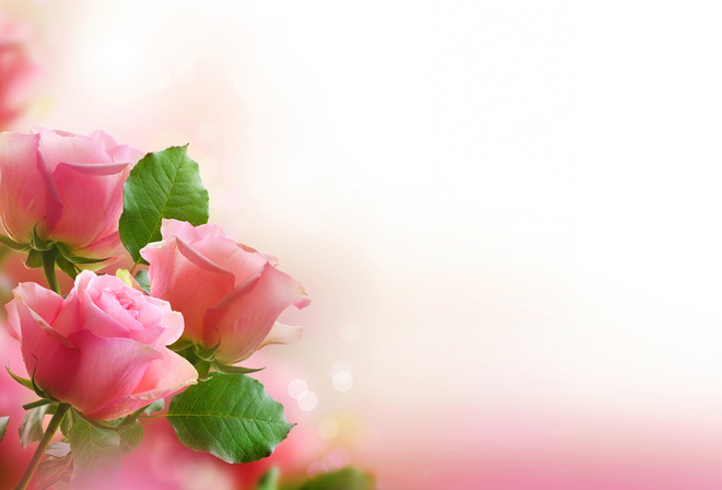 Rose, pink, Flowers, bouquet, leaves, Petals
