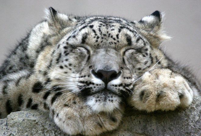 Data rescue 3 snow leopard