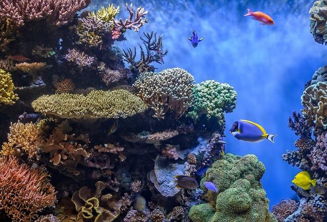 Морское дно картинки красивые