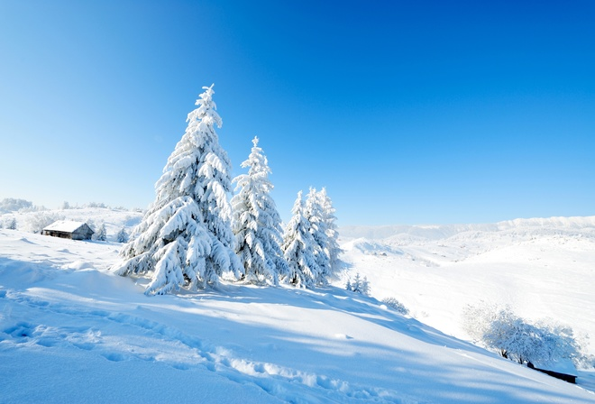 Fir, Nature, Scenery, Snow, Winter