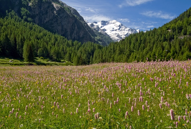 Gran Paradiso national Park, горы, альпы, лес, луг, италия