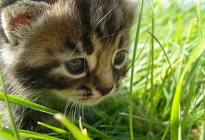 in, cat, the, grass, , Baby