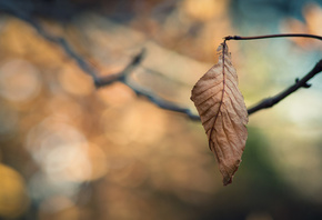 leaves wallpapers, ветка, Bokeh wallpapers, ветки, macro wallpapers, leaf w ...