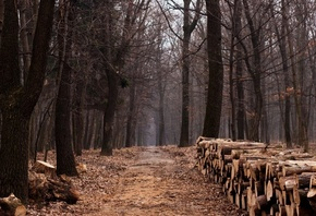 дорога, trail, trees, path, forest, lumber, wood, лес