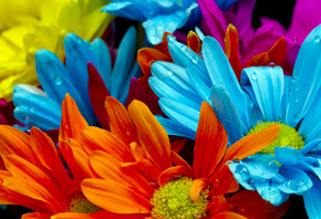 violet, lactic, Bright colorful flowers, orange, red, water drops