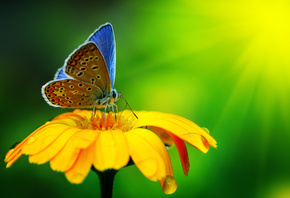 beautiful, butterfly, yellow flower, macro, nature, Water Drops, красиво, б ...