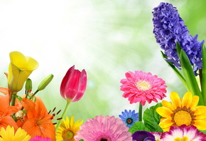 spring, flowers, colorful, gerbera, butterflies, bright, цветы, бабочки, весна