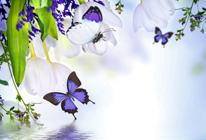 spring, blossom, tulips, purple, flowers, butterflies, reflection, water, в ...