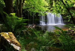 Brecon Beacons, National Park, Англия, водопад, лес, папоротник