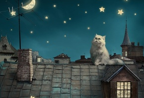 Persian white cat, kitten, Fairytale, fantasy, roof, house, sky, night, stars, moon
