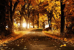 autumn breeze, autumn, breeze, flower, trees, road, sun, shine, yellow, cool, hot, awesome, nice, view, sunset, leaves, leaf, bright, sunny, day, night, forest, jungle, summer, spring, winter