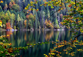 autumn, leaves, lake, reflection, tree, forest, water
