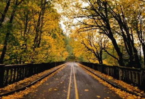 road, tree, forest, fence, autumn, leaves, naturals