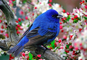 bluebird, wild, fly, branch, tree, bird