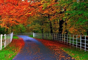 autumn, road, tree, yellow, leaves, fence, clors