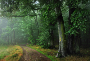 forest, path, tree, green