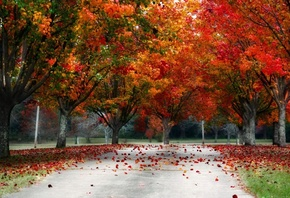 leaves, red, tree, autumn
