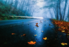 leaves, road, tree, mist