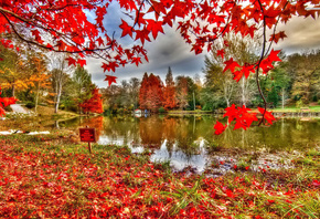 river, reflextion, tree, leaves, red, autumn