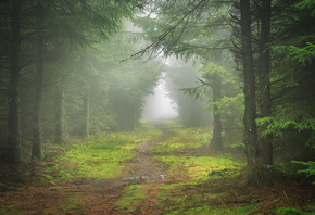mist, path, tree, forest, lonely, leaves, tree
